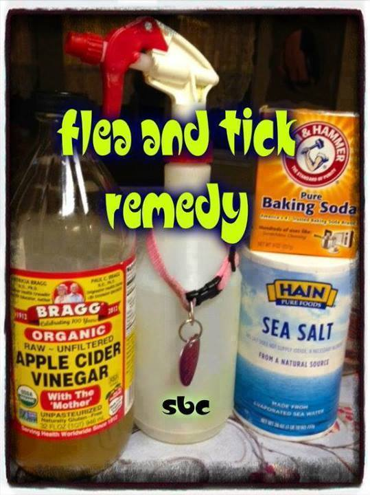 flea tick remedy