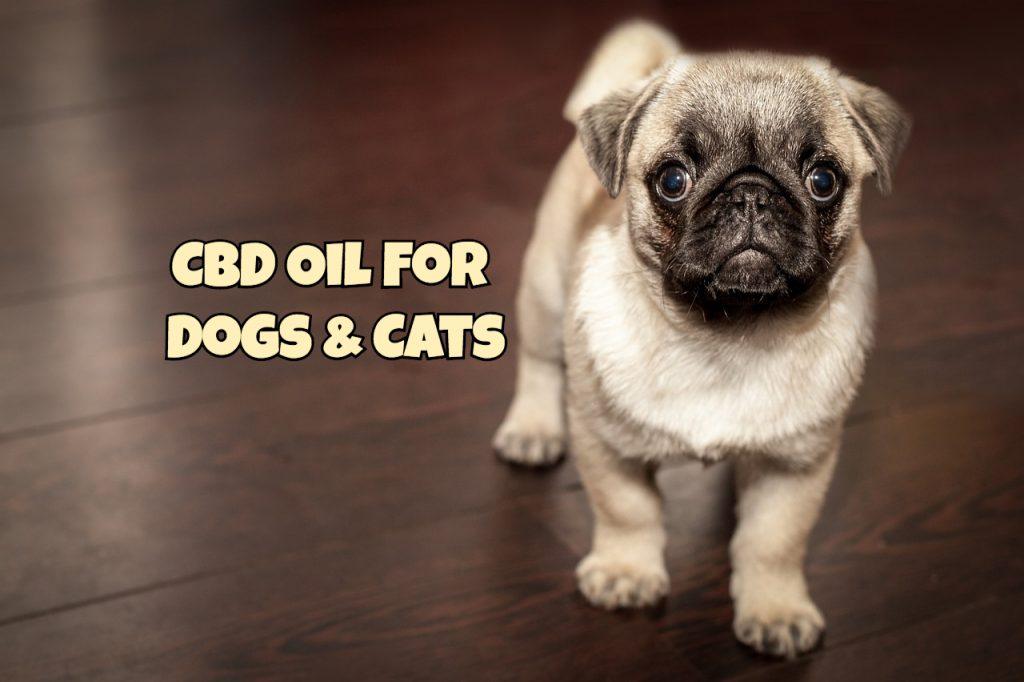 Cbd Dog Treats For Pain Free Sample